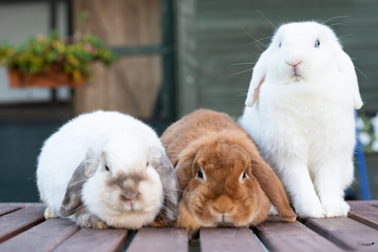 bunny4
